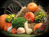 harvestdisplay
