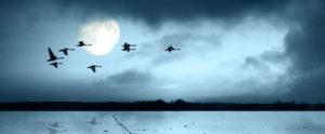 night-migrating-birds
